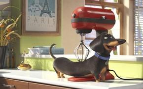 Картинка apple, cinema, Paris, dog, cup, cartoon, fruit, movie, window, animal, book, film, mixer, wheat, massage, …
