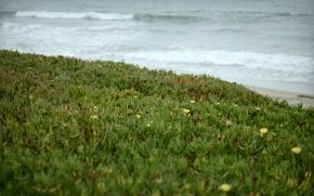 Картинка волны, трава, берег
