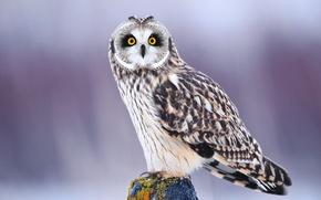Обои зима, глаза, взгляд, сова, птица