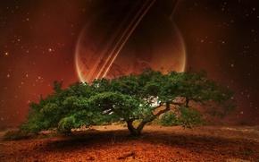 Картинка зелень, космос, звезды, природа, дерево, листва, планета