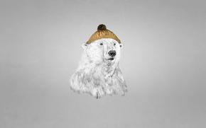 Картинка bear, темноватый фон, белый медведь, шапка