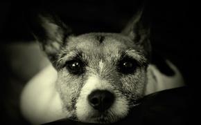 Картинка взгляд, друг, собака, нос