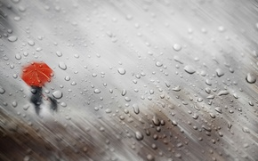 Обои осень, стекло, девушка, капли, дождь, собака, зонт, силуэты