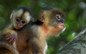 Картинка обезьяны, Амазония, (фильм)