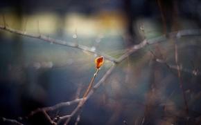 Картинка осень, макро, ветки, лист, блики, боке