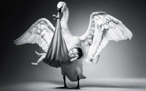 Обои птица, крылья, малыш, черно-белое, ребёнок, гусь