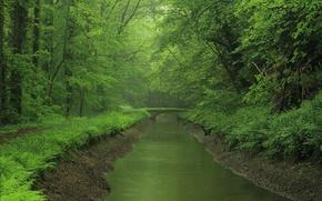 Обои мост, река, лес