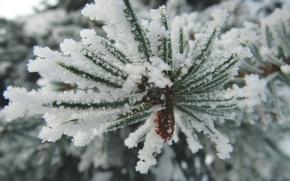 Обои зима, снег, ель, ветка, мороз