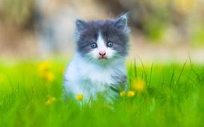 Картинка трава, взгляд, малыш, котёнок