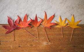 Картинка wood, autumn, leaves, marble