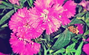 Картинка flower, pink, purle