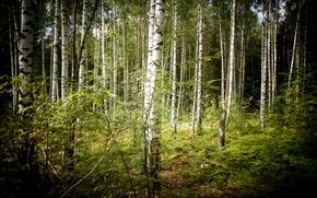 Природа лес лето деревья обои фото