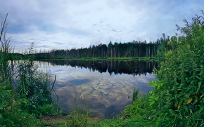 Картинка лес, трава, река
