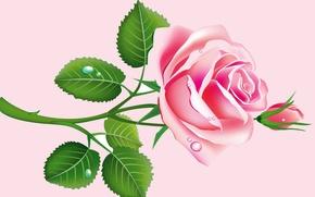 Картинка листья, капли, роза, вектор, лепестки, бутон, открытка