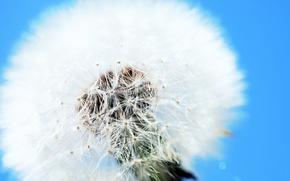 Картинка одуванчик, Clear, white and blue