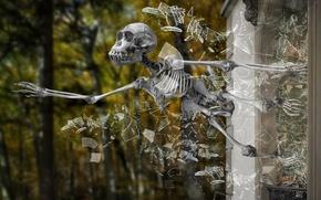 Картинка стекло, осколки, череп, скелет