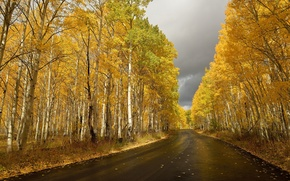 Обои осень, берёзы, дорога