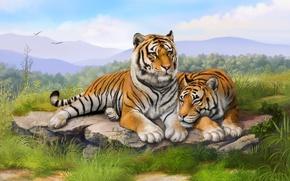 Картинка трава, камни, живопись, тигры, art, лежат, olggah