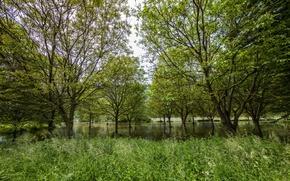 Картинка лес, трава, деревья, река, Германия, Mosel