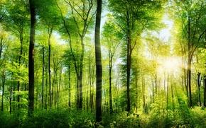 Обои лучи солнца, деревья, лето, зелень, лес