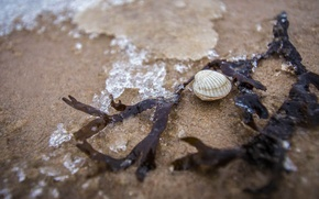 Картинка море, пляж, макро, ракушка