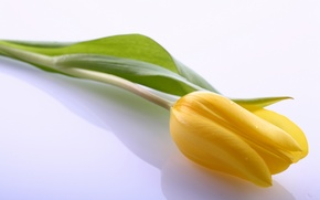 Картинка листья, цветы, яркий, жёлтый, тюльпан, красота, светлый, лепестки, yellow, flowers, beauty, petals, bright, Tulips