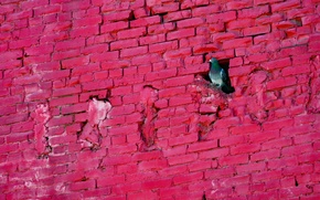 Обои голубь, стена, птица
