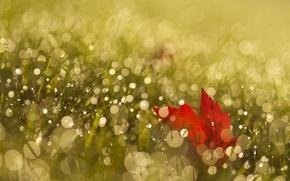Картинка трава, лист, роса, блики