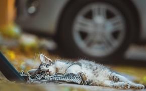 Картинка котенок, отдых, двор