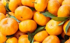 Обои фрукты, листья, мандарины