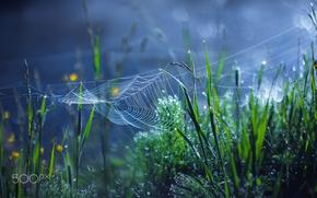 Обои паутина, боке, трава, макро, роса