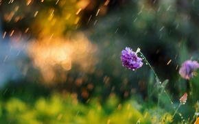 Обои зелень, цветок, лето, цветы, природа, фон, обои, размытие, утро, луг, день, wallpaper, nature, широкоформатные, flowers, ...