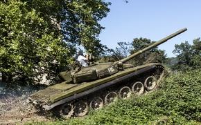 Картинка power, tank, vegetation, Вроде как Т-72