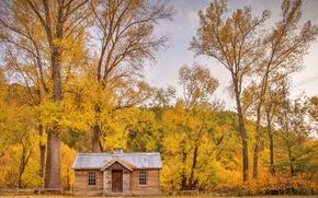 Картинка деревья, природа, дом