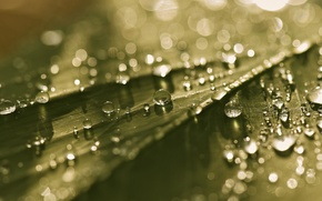 Картинка мокро, капли, макро, свет, лист, блики, боке