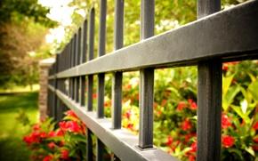 Картинка макро, цветы, красный, фон, widescreen, обои, забор, ограда, ворота, ограждение, wallpaper, цветочки, flower, широкоформатные, flowers, …