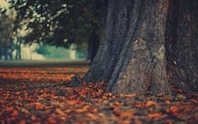 Обои дерево, природа, осень, обои, листья