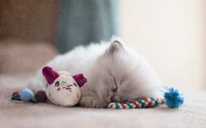 Картинка кошка, котенок, игрушки, обработка, пушистый, мышка, спит, пол, устал, рэгдолл