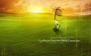 Картинка закат, восход, зеленый газон, находка, игры, артефакт