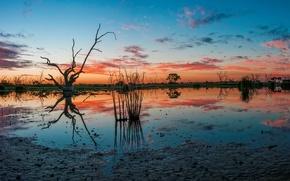 Картинка Australia, Campbell's Swamp, Lake Wyangan
