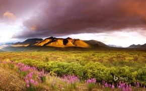 Картинка небо, облака, цветы, горы, долина, Канада, Юкон
