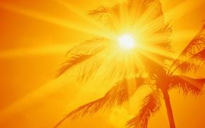 Обои солнце, жара, пальма