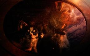 Картинка зеркало, арт, собачки