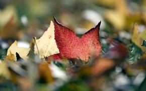 Картинка осень, листья, листва
