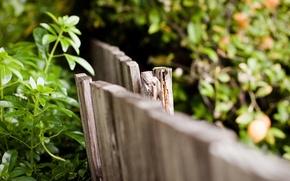 Картинка листья, макро, фон, widescreen, обои, забор, ограждение, деревянный, wallpaper, листочки, широкоформатные, background, macro, полноэкранные, HD …