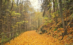 Картинка листва, Осень, дорожка, аллея, листопад, autumn, leaves, alley, path, fall