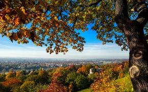 Картинка осень, деревья, мост, город, дерево, вид, дома, Германия, Дрезден, холм, Germany, Dresden, Deutschland