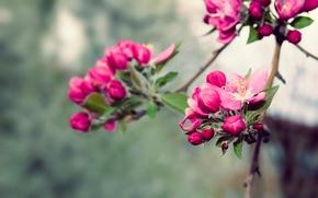 Картинка nature, spring, blossoms