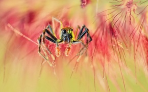 Обои макро, паук, spider