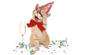 Картинка котенок, животное, праздник, шампанское, бант
